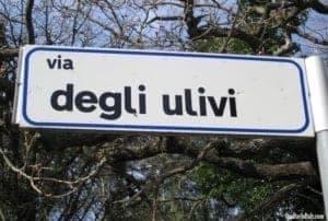 Olive tree road